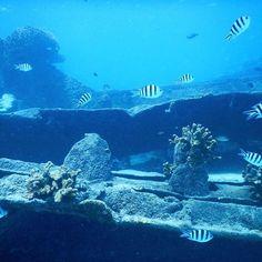 【miwa21n】さんのInstagramをピンしています。 《. #おつかれさまです 🌝 #360度水族館 𓆡𓆜𓇼𓈒 . 夜勤忙しすぎてしんどすぎて、 お得意の#現実逃避 🙄 つくばーっく🚙💨笑 そしてエステへ直行💆笑 疲れもストレスも流してもらいました〜 ありがたや🙏💓💓 . 来年やっていけるか心配だよ〜😩💨笑 . #blue #skyblue #beach #beachgirl #sea #trip #travel #saipan #love #happy #nikon #diving  #青 #綺麗 #海 #女子旅 #タビジョ #ダイビング #シュノーケル #サイパン #写真好きな人と繋がりたい #誰かに見せたい景色 #青の世界 #旅 #沈船》