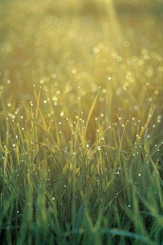 FreeiOS7 | morning-grass-yellow | freeios7.com
