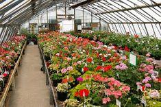 7 Best Plant Nursery Business Ideas
