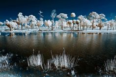 While you can shoot infrared photography an all types of lens, there are a few which are perfect for shooting IR images. Description from photographytuts.com. I searched for this on bing.com/images