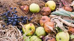 Green power: Power your home with kitchen scraps? Scientists figure out how to generate electricity from decomposing food