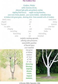 A poem taken from 'Secret Garden of the Soul' and inspired by abeautifulsilver birch tree in afriend's garden in Dorset, where I sometimes go to write.  The tree looks remarkably like a woman standing with her arms outstretched,blessingand protecting and giving beauty, nourishment and joy to the garden and those in it.The sort of place you can sit and reflect and receive great inspiration and nurturing.