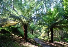 types of ferns - Google Search