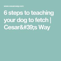 6 steps to teaching your dog to fetch | Cesar's Way