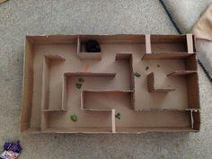 DIY cardboard hamster maze I made - cut up a TV box and used hot glue gun