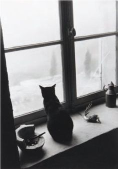 "Willy Ronis / ""Le chat à la pipe, Gordes"", 1957"