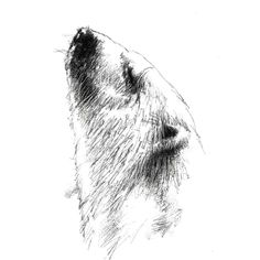 Bear Sketch, Sketch A Day, Fine Art Drawing, Art Drawings, Surface Design, Polar Bear, How To Draw Hands, Sketches, Fine Art Prints