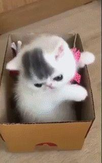 Small Kitten in a Box