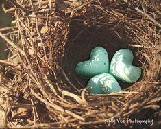 Popular items for love bird nest on Etsy