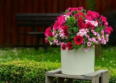Petunia flowers on a container