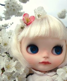 cherry blossoms by momomaiden, via flickr