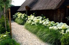 Hydrangeas And Ornamental Grasses Landscaping. You can create a natural fences with hydrangeas combined with ornamental grasses. Hydrangea Landscaping, Front Yard Landscaping, Landscaping Ideas, Landscaping With Grasses, Landscaping Borders, Landscaping Software, Garden Borders, River Rock Landscaping, Landscaping Melbourne