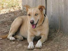 COSTAS - TAILS FROM GREECE RESCUE in Toronto, ON - Rescuing the dogs of Greece…