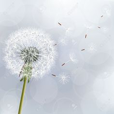 Floral trendy background with flower dandelion Beautiful nature wallpaper