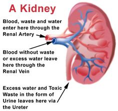 Stages of kidney failure kidney bladder gallstones pinterest aftermath newz ccuart Image collections