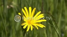 1 hour Relaxation For Children - Quiet Music, Instrumental Music Harmony - Detlev Jöcker Endlich schlafen Meditation Kids, Guided Meditation, Music For Kids, Kids Songs, Children Music, Indoor Recess, The Wiggles, Little Learners, Brain Breaks