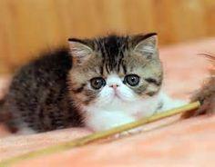 Как кормить котенка 1.5 месяца Чем кормить котёнка 1, 1,5, 2 и 3 месяца. Информация о том, чем и сколько кормить месячного котёнка. Как изменяется диета котёнка с возрастом.    ... http://sasl.ru/wp-content/uploads/2015/06/bath28.jpg Подробнее можно прочитать здесь: http://sasl.ru/interesnoe/kak-kormit-kotenka-1-5-m