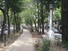 #amsterdam en Colonia Condesa #endondecorrer