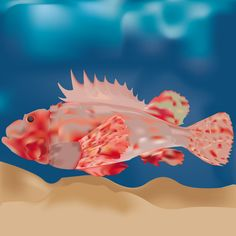 Scorfano. Adobe Illustrator. Tecnica trama. Autore Iraia Civiero 3Al