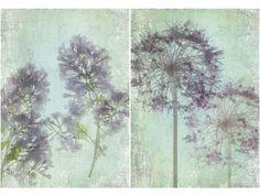 xray flower garden - Google Search