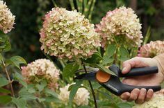 Drying hydrangeas for bouquets - in just 30 minutes - Talu.de - Drying hydrangeas for bouquets – in just 30 minutes - Backyard Flowers, Plants, Garden Decor, Garden Care, Backyard Garden, Luxury Garden, Hydrangea Care, Patio Plants, Dried Hydrangeas