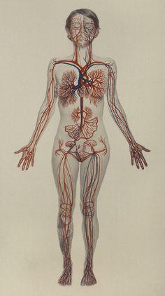 Anatomía bordada en fotografía