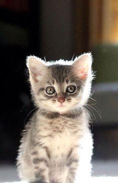 Awww so cute!!