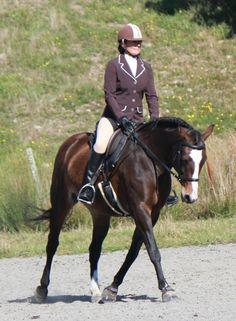 The Bitless Bridle Debate Dressage Horses Riding