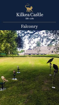 The majesty of Falcons, Owls and Hawks can be experienced amidst the backdrop of our historic Castle.