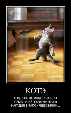 Like the boos Funny Cats And Dogs, Funny Animals, Vodka Humor, Hello Memes, Russian Memes, Scared Cat, Life Memes, Stupid Funny Memes, Man Humor