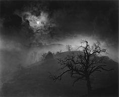 """Stark Tree"" by Wynn Bullock, 1956"