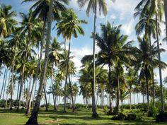 Bengkenang beach- Manna, Bengkulu Selatan, Indonesia