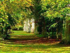 árboles imágenes, fondos de pantalla verdes, vector de la vegetación, fotos serenidad, hierba, parque fondos, clasifica imágene