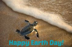 Newly hatched baby turtle toward the ocean. Photo of newly hatched baby turtle t , World's Cutest Baby, Turtle Hatching, Baby Sea Turtles, Turtle Baby, Khao Lak, Tiny Turtle, African Cichlids, Lol, Animals Of The World