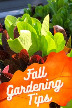Aaaah Autumn. The season of pumpkin spice lattes, apple picking, and the harvest moon. And, of course, fall gardening! Put your green thumb to work to ensure a robust vegetable garden with these top fall gardening tips for a bountiful autumn harvest. #fall #autumn #gardening #tips