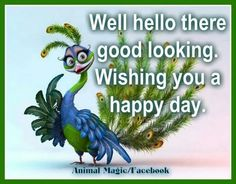 {*} HELLO Hey good lookin, have a happy day! Hello Pictures, Hello Pics, Lekker Dag, Goeie More, Welcome To My Page, Have A Happy Day, Hey Good Lookin, Animal Magic, Hello To Myself