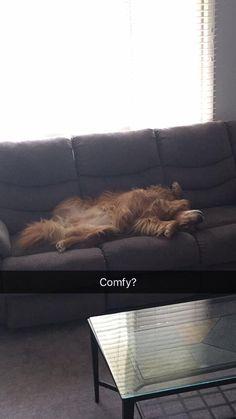 He lives a rough life http://ift.tt/2i1nJ5n