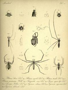 5 - Verhandelingen der Natuurkundige Vereeniging in Nederlandsch Indië. - Biodiversity Heritage Library
