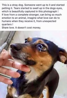 They have feelings and understanding of kindness and unkindness! Please be kind to dogs and all animals! Animals And Pets, Baby Animals, Funny Animals, Cute Animals, Funny Cats, Cute Puppies, Cute Dogs, Dogs And Puppies, Rescue Puppies