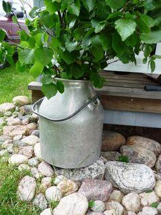 Jemina Staalon kuvia 2014: Juhannuksen aaton aatto 2014 Plants, Planters, Plant, Planting, Planets