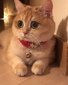 Funny Animals memes and pics Cute Cats And Kittens, I Love Cats, Crazy Cats, Kittens Cutest, Pretty Cats, Beautiful Cats, Animals Beautiful, Cute Baby Animals, Animals And Pets