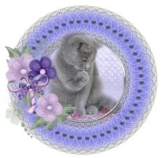 Pet Dogs, Dog Cat, Magic Cat, Cat Art, Decorative Plates, Cats, Blog, Buttons, Animales
