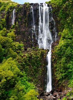 Wairere Falls, New Zealand. Highest waterfall in north island, 152m.  Stunning! Great trail run...
