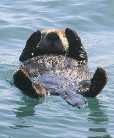 Otter at rest