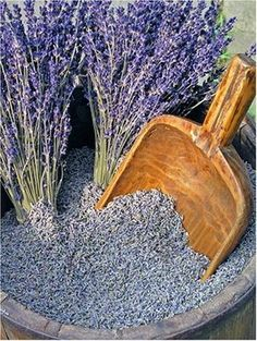 Drying Lavender: How to Dry Lavender Flowers at Home Wie Lavendel zu Hause trocknen Lavender Blue, Lavender Fields, Lavender Flowers, Dried Flowers, Drying Lavender, Lavender Crafts, French Lavender Plant, Lavender Ideas, Wedding Lavender