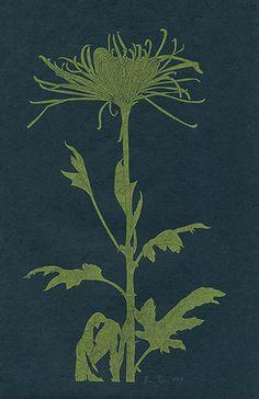 Henry Evans Botanical Prints Vol 13 & 34 1965, 1975