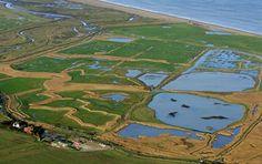 Cley Marshes, Norfolk One of the UK's premier birdwatching sights. Norfolk Beach, Norfolk Coast, Salt Marsh, Norfolk England, Nature Reserve, Bird Watching, Habitats, Tourism, Coastal