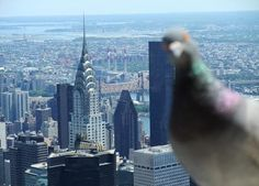 THIS PICTURE IS SO PERFECT FOR SO MANY REASONS. 1) the Chrysler building is my favorite building, ever. 2) i love pigeons (i know, i'm weird, but they are adorable, make cute noises, and carry letters and stuff).