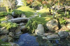 Small Koi Pond Rock Bridge With Green Grass And The Tree Lik Forest Surounding At Yard Garden Ready to Meditate in Japanese Zen Garden? garden design