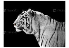 East Urban Home Fototapete Weißer Tiger 309 cm x 400 cm Geometric Wallpaper Murals, Tiger Wallpaper, Wallpaper Panels, Photo Wallpaper, Wall Wallpaper, Tube Carton, Wild Tiger, Elephant Parade, Vintage Library